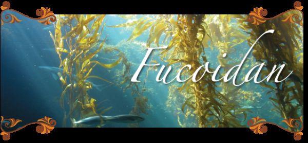 Fucoidan loại nào tốt? Cách sử dụng hiệu quả