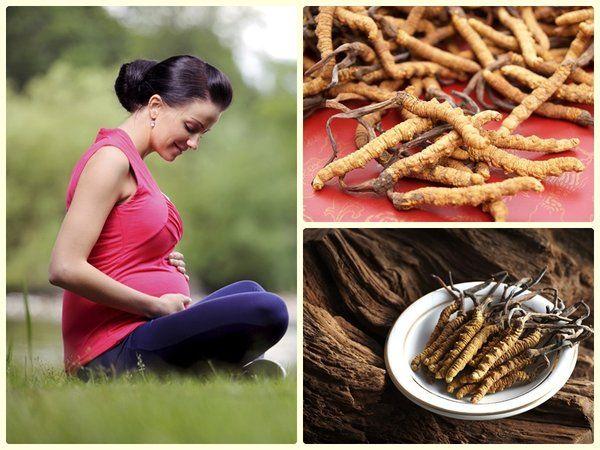Công dụng đông trùng hạ thảo đối với phụ nữ sau sinh, mang thai, cho con bú